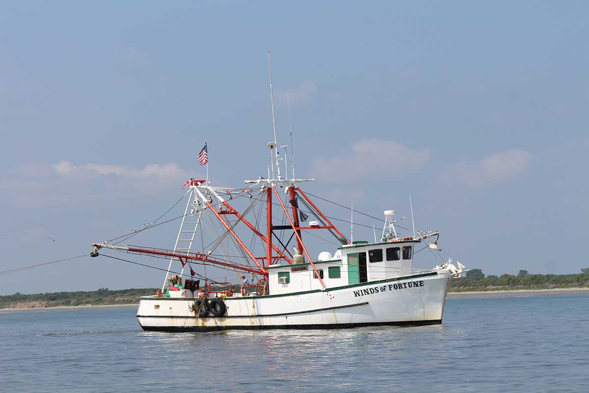 Shrimp trawl