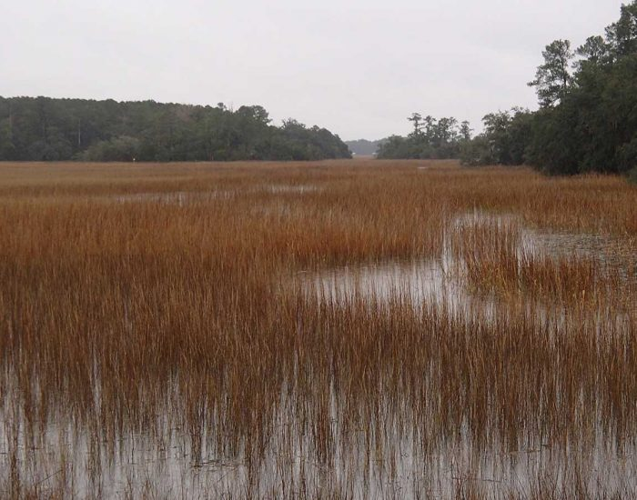 Salt Marsh in the Winter