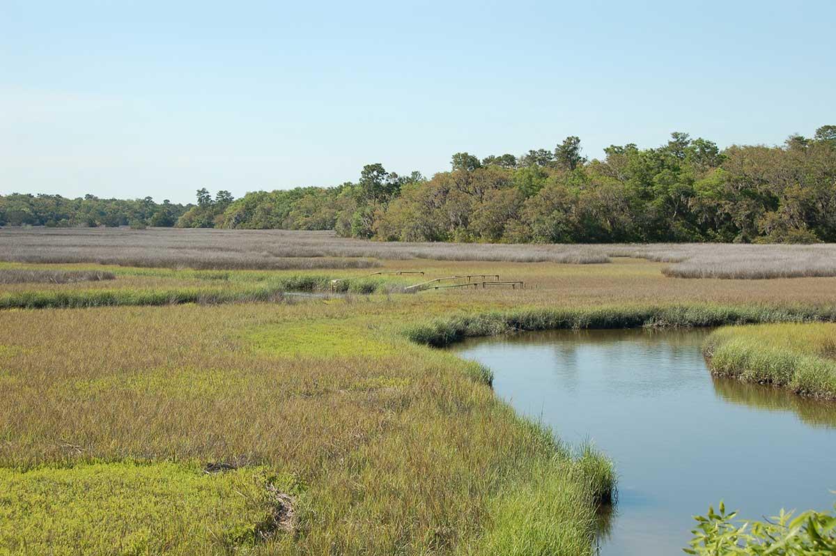 Marsh platform and tidal creek in Florida.
