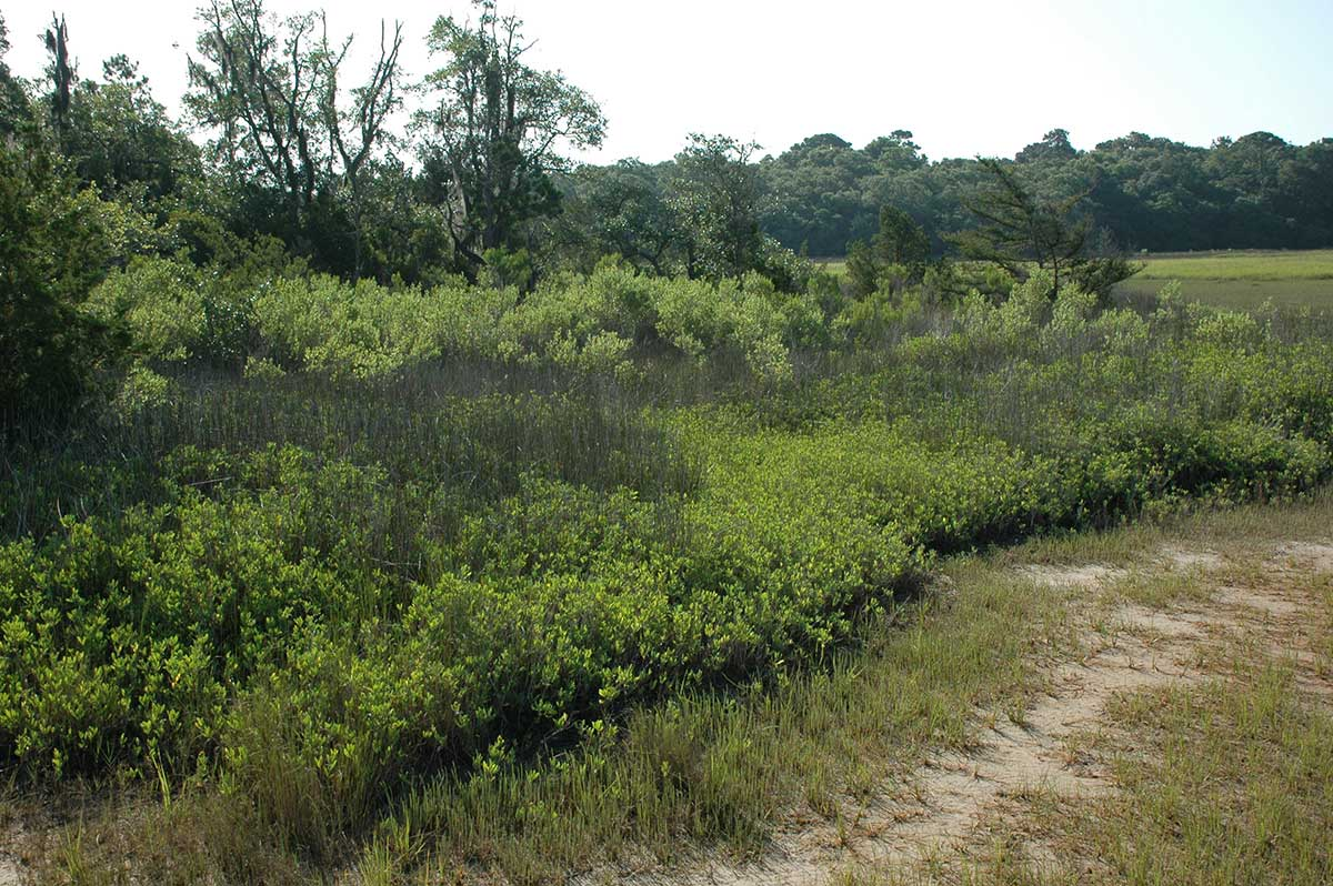 Example of an upland border.
