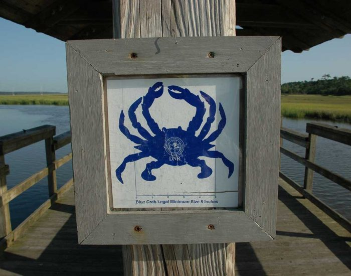 Blue crab measuring board showing the minimum size allowed.