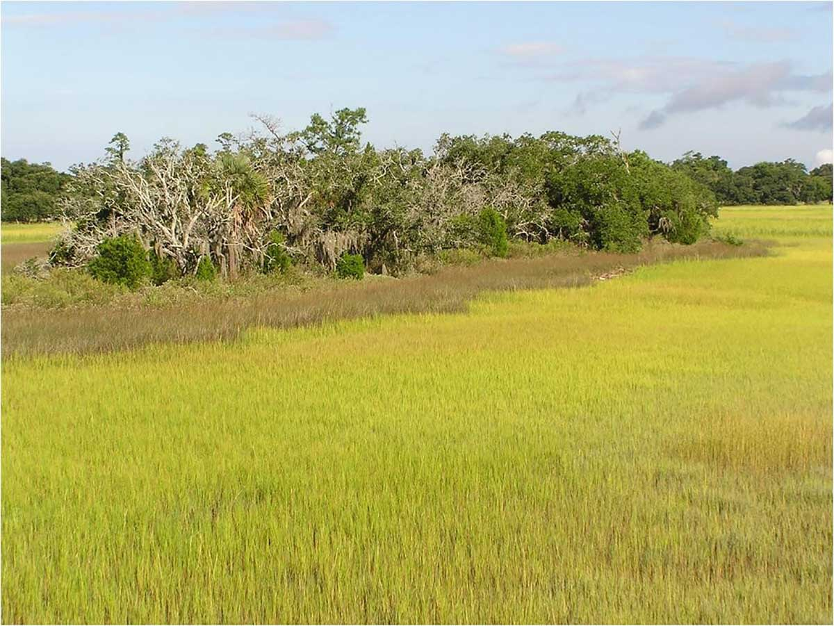 A marsh hammock. It is a small raised island of trees and plants surrounded by grass-covered salt marsh.