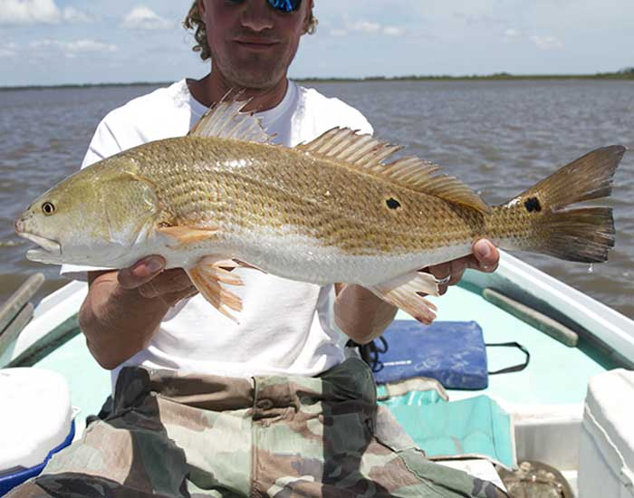 A large red drum fish being held with two hands in a fishing boat. It has a spiny fun and a spot on the tail.