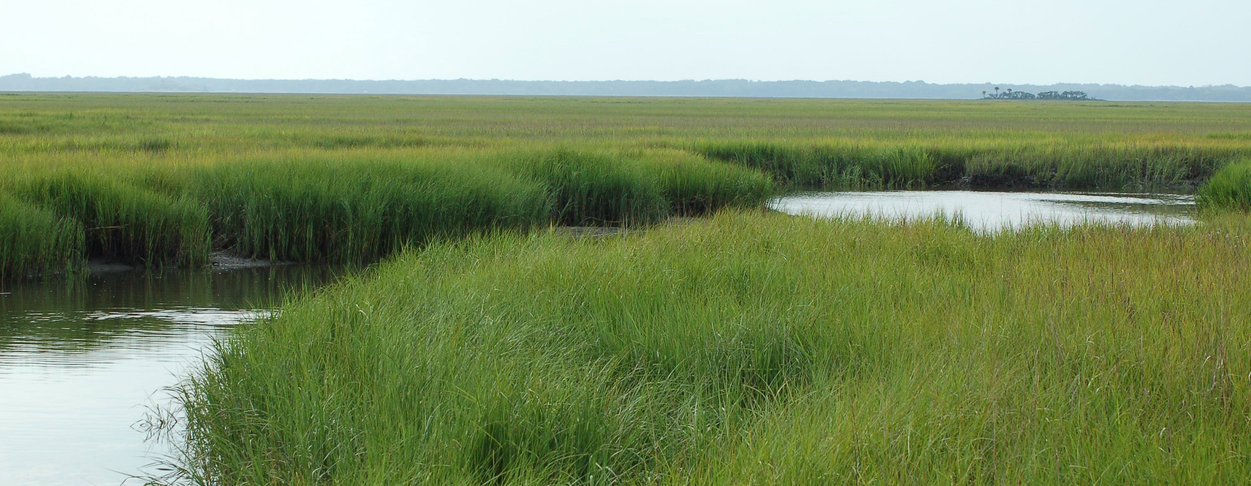 A marsh with a tidal creek.